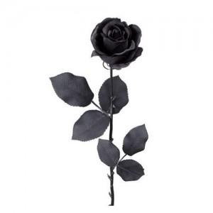 črna vrtnica