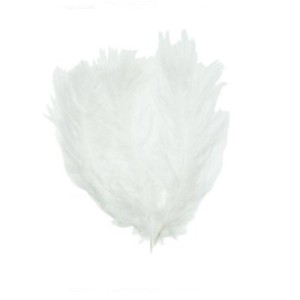 Perje belo  24/1
