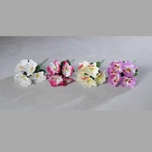 Šopek orhidej 8743